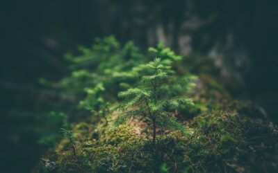 Olaylar ve Dualar – 15 |Salgın Hastalığın Def'i İçin Seçkin Bir Dua | Mustafa Yılmaz